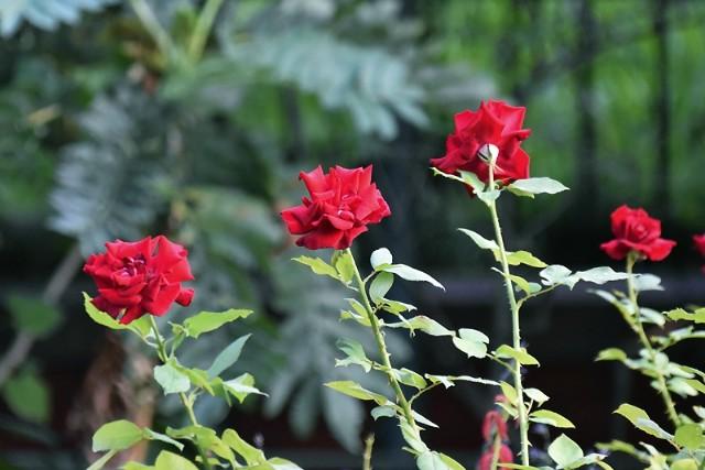f:id:flowerTDR:20211019091623j:image