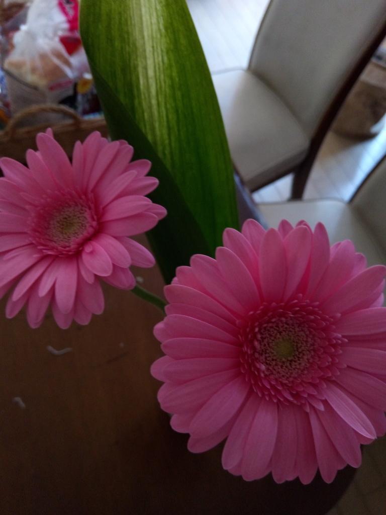 f:id:flowerflowerchild-k:20190210215321j:plain