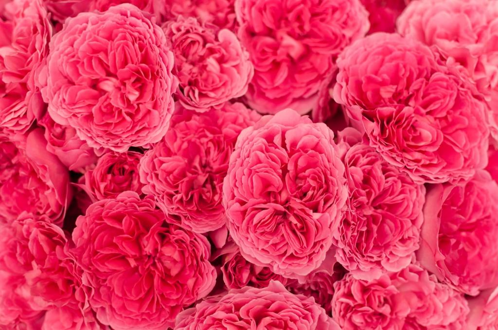 f:id:flowering-chamomil:20161219055819j:plain