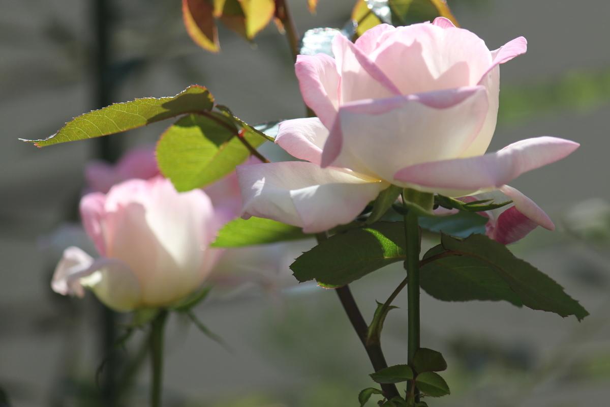 f:id:flowerphoto:20190824203653j:plain