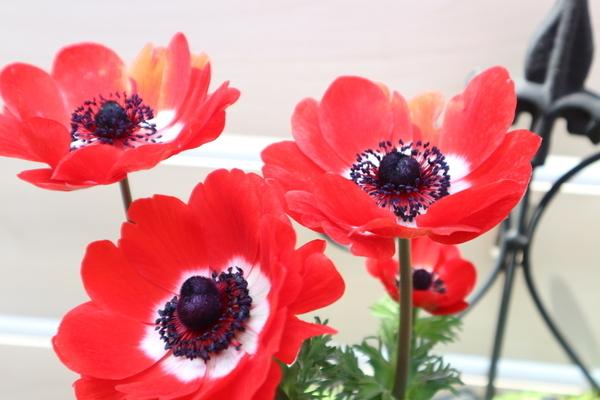 f:id:flowerphoto:20190928004158j:plain