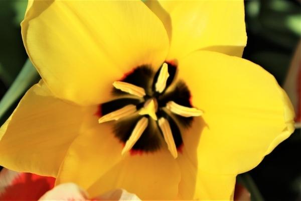 f:id:flowerphoto:20190928005654j:plain