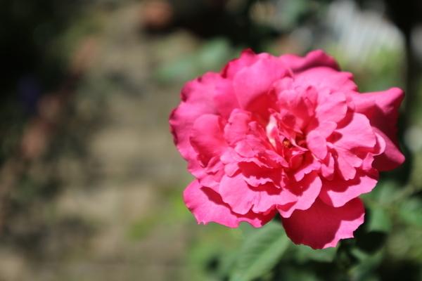 f:id:flowerphoto:20190928005749j:plain