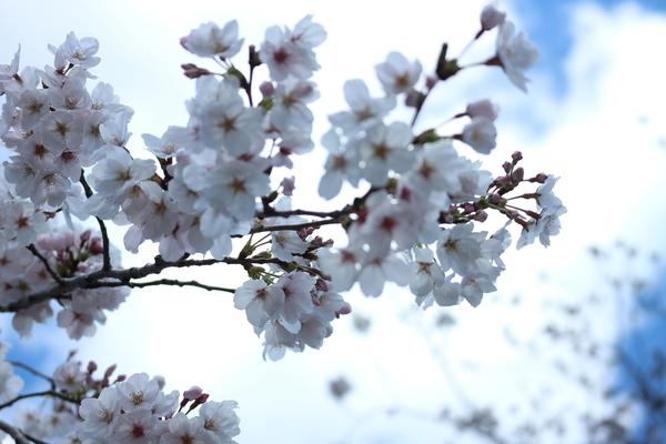 f:id:flowerphoto:20190928010221j:plain