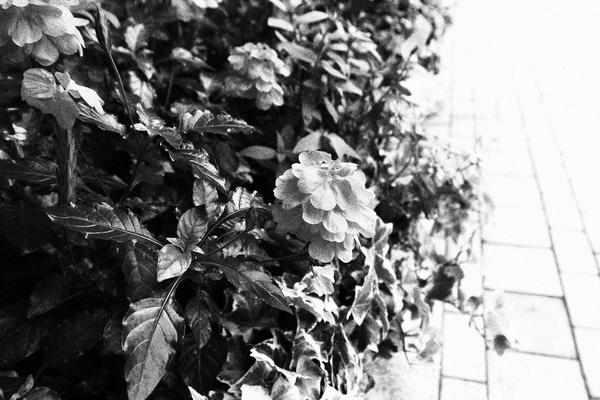 f:id:flowerphoto:20190928104715j:plain
