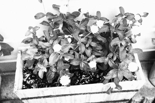 f:id:flowerphoto:20190928114442j:plain
