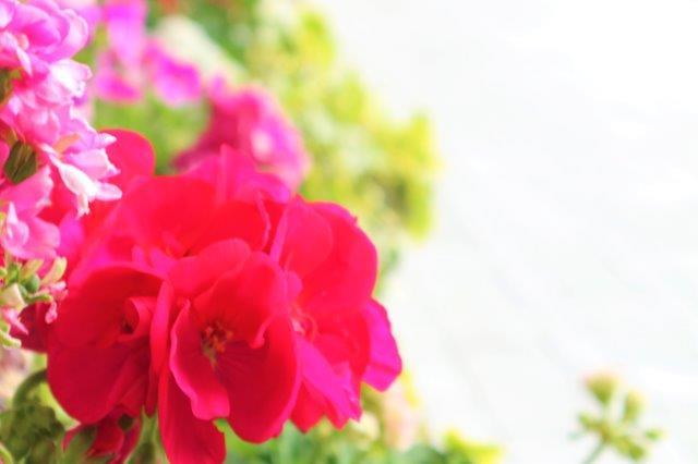 f:id:flowerphoto:20190929090345j:plain