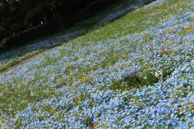 f:id:flowerphoto:20190929114258j:plain