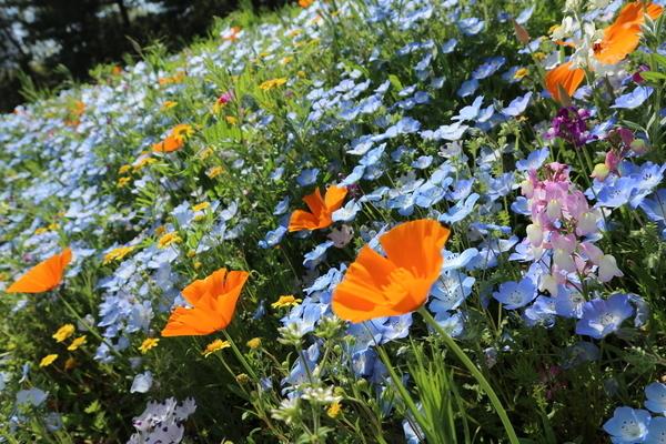 f:id:flowerphoto:20190929114948j:plain