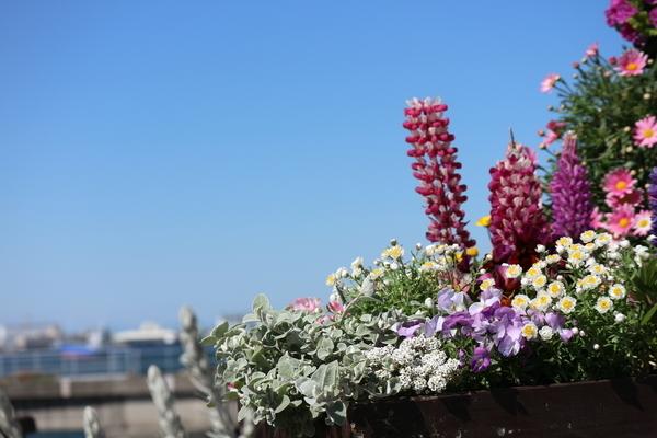 f:id:flowerphoto:20191121003801j:plain