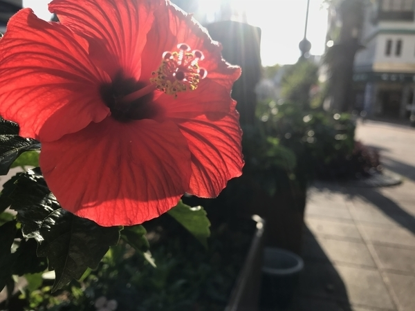 f:id:flowerphoto:20191126003630j:plain