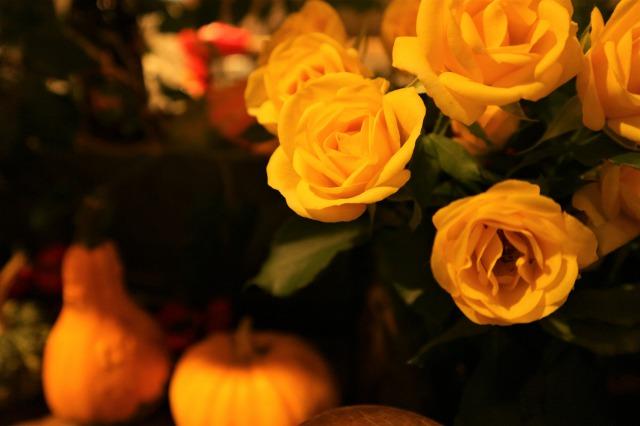 f:id:flowerphoto:20200113113622j:plain