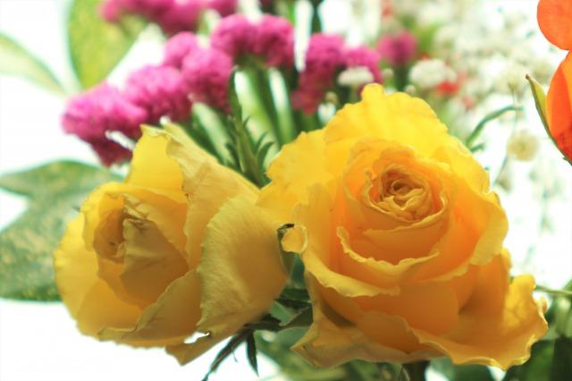 f:id:flowerphoto:20200312005934j:plain