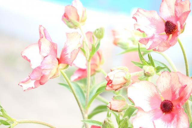 f:id:flowerphoto:20200322231449j:plain