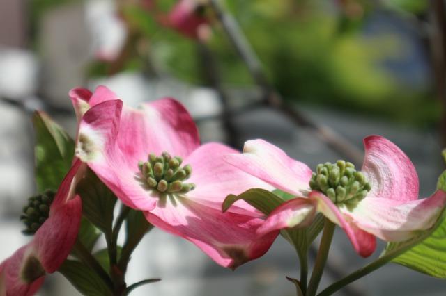 f:id:flowerphoto:20200420004502j:plain