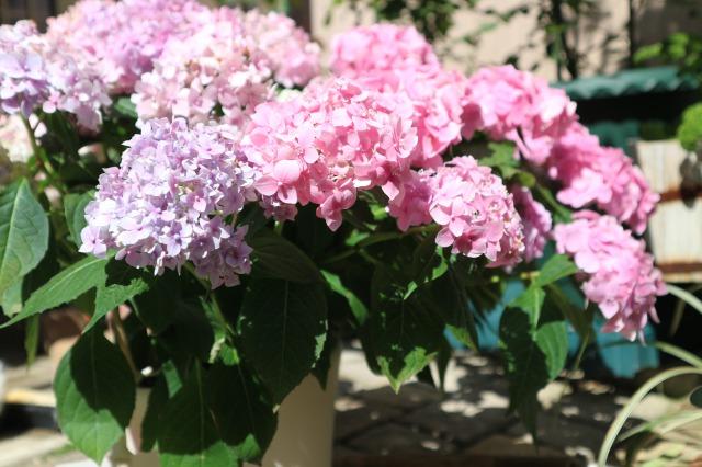 f:id:flowerphoto:20200504011631j:plain