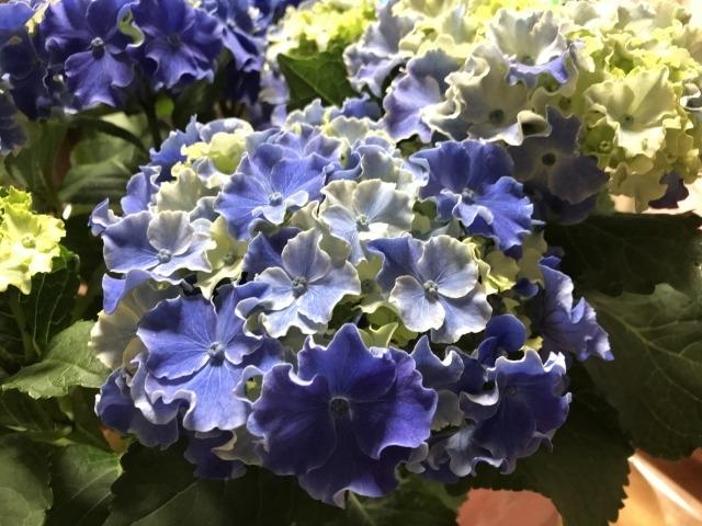 f:id:flowerphoto:20200505005250j:plain