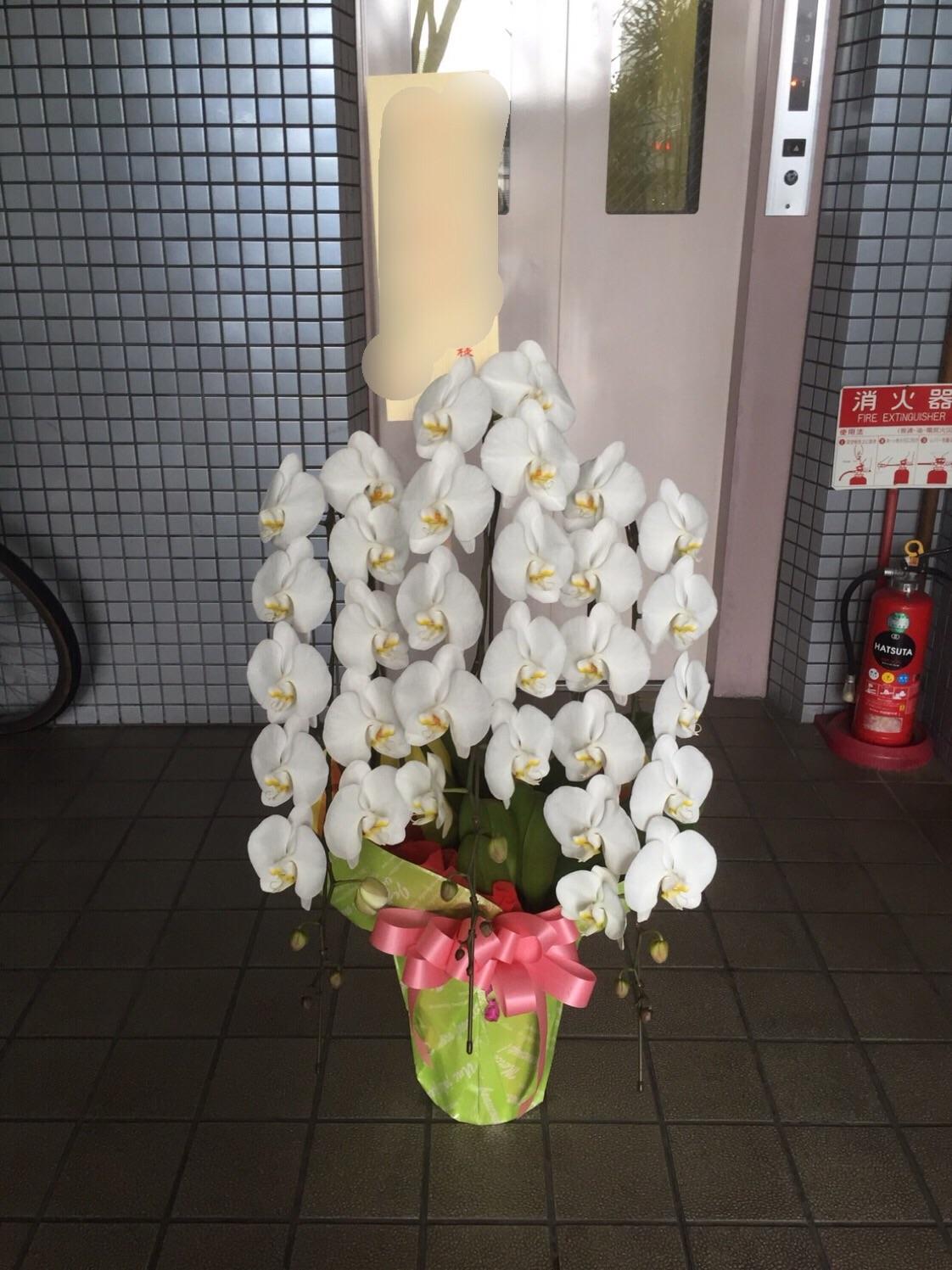f:id:flowerpot0923:20160914214508j:image