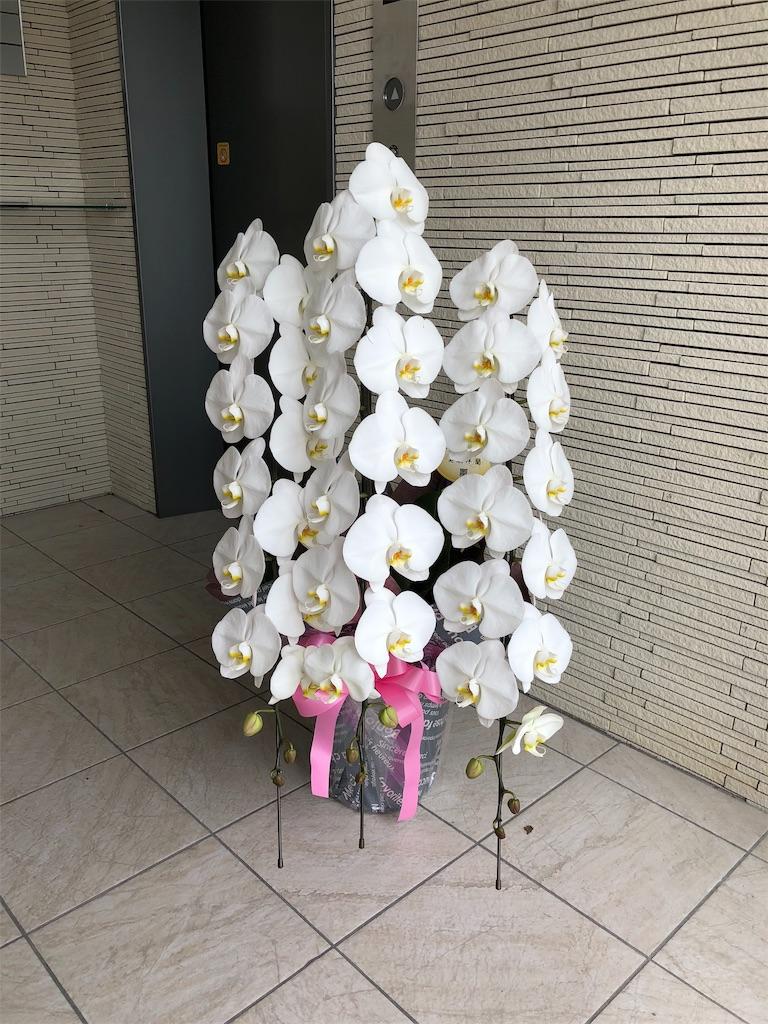 f:id:flowerpot0923:20180919084634j:image