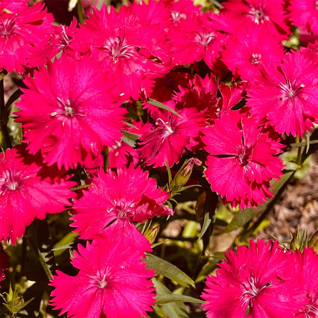 f:id:flowers4algernon0502:20210509122842j:plain