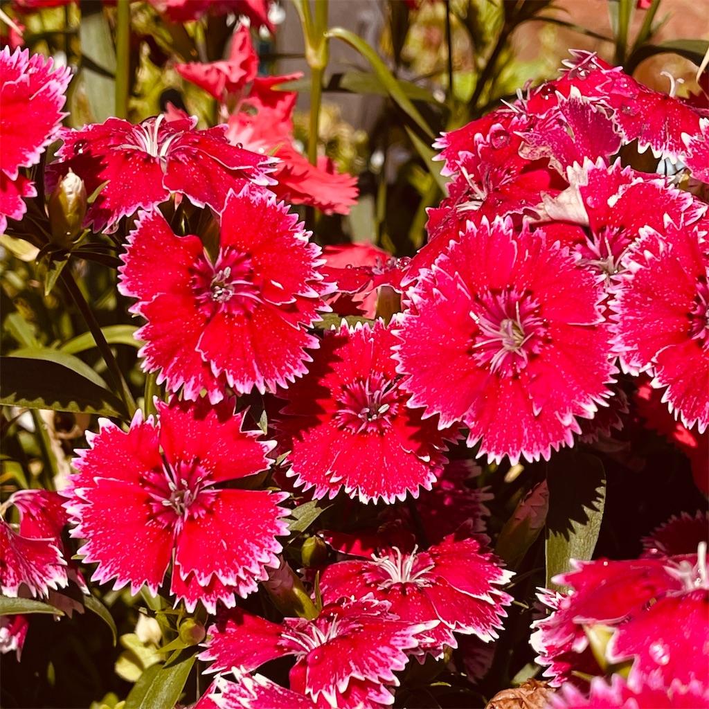 f:id:flowers4algernon0502:20210511093540j:plain