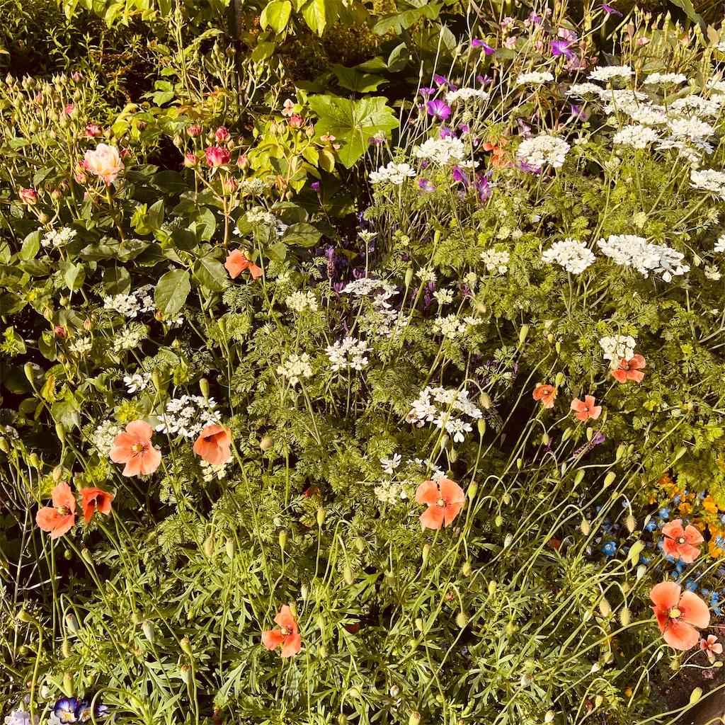 f:id:flowers4algernon0502:20210512065218j:plain