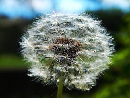 f:id:flowersandcitrons_m:20170518141838j:plain