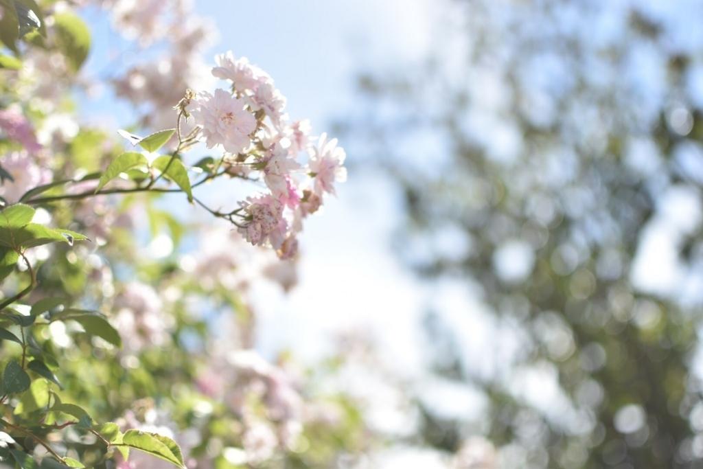 f:id:flowersounds:20170701105440j:plain