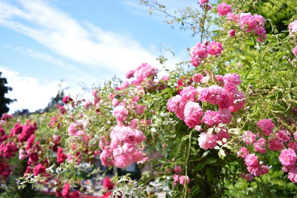 f:id:flowersounds:20170722085105j:plain