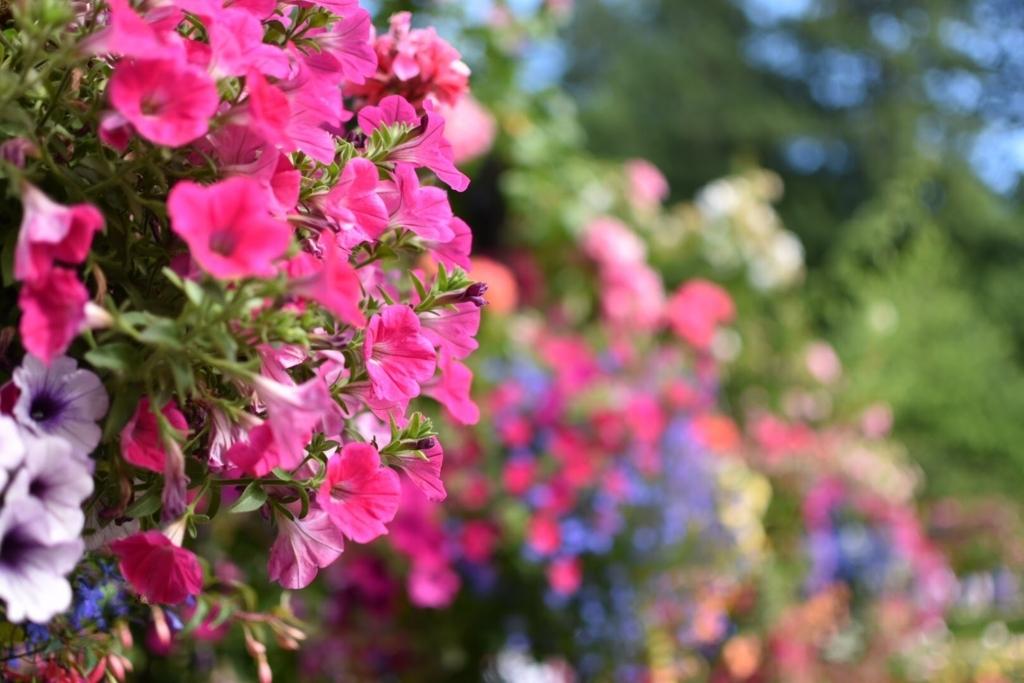 f:id:flowersounds:20170722085203j:plain