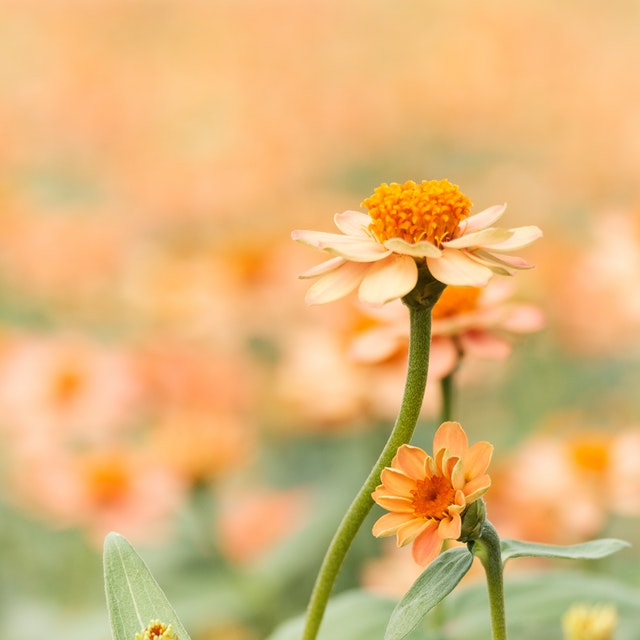 f:id:flowersugars:20180814195634j:plain