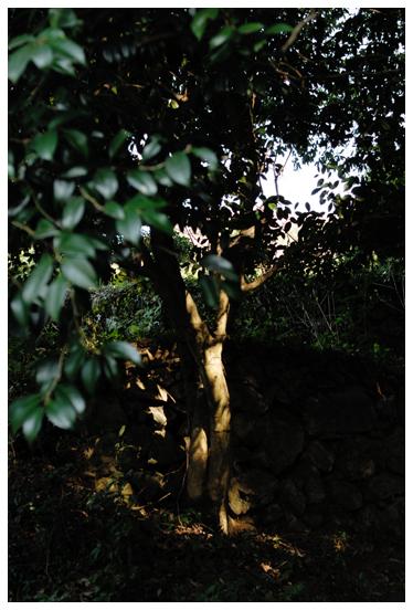 森の木洩れ日