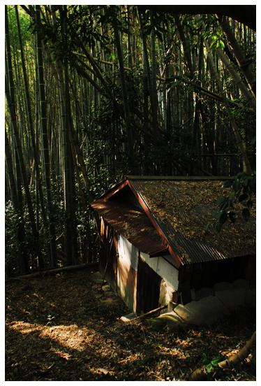 竹林 小屋