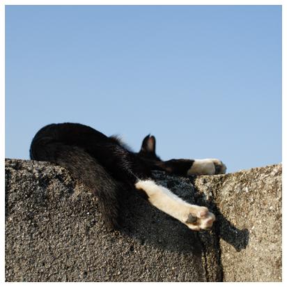 猫さん 防波堤