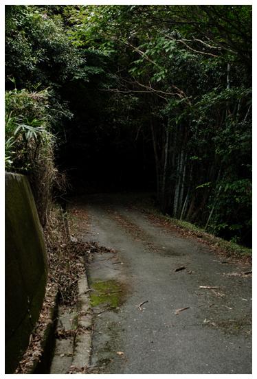 お散歩 山道