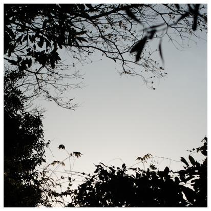 木々と冬の空