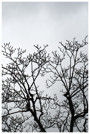 冬の空とモクレン