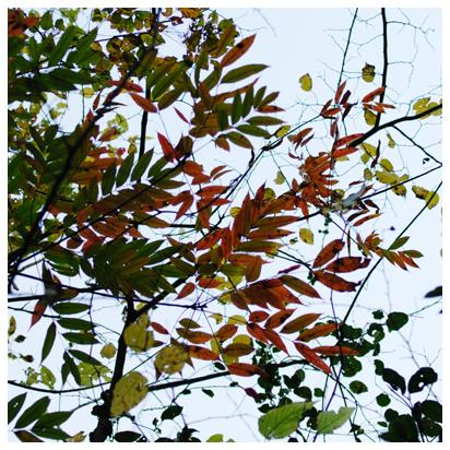 12月の空と葉っぱたち