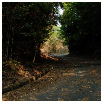 午後の散歩 コース