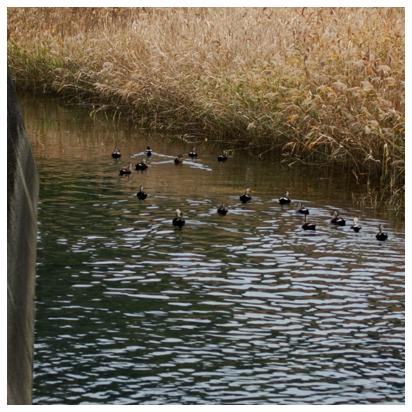 水辺の渡り鳥