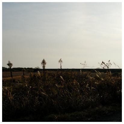 逆光と枯葉色の風景