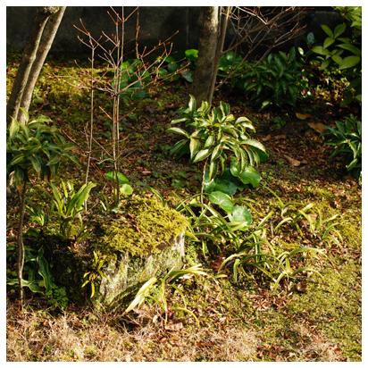 庭の植物たち