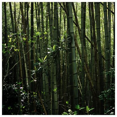 4月の竹林
