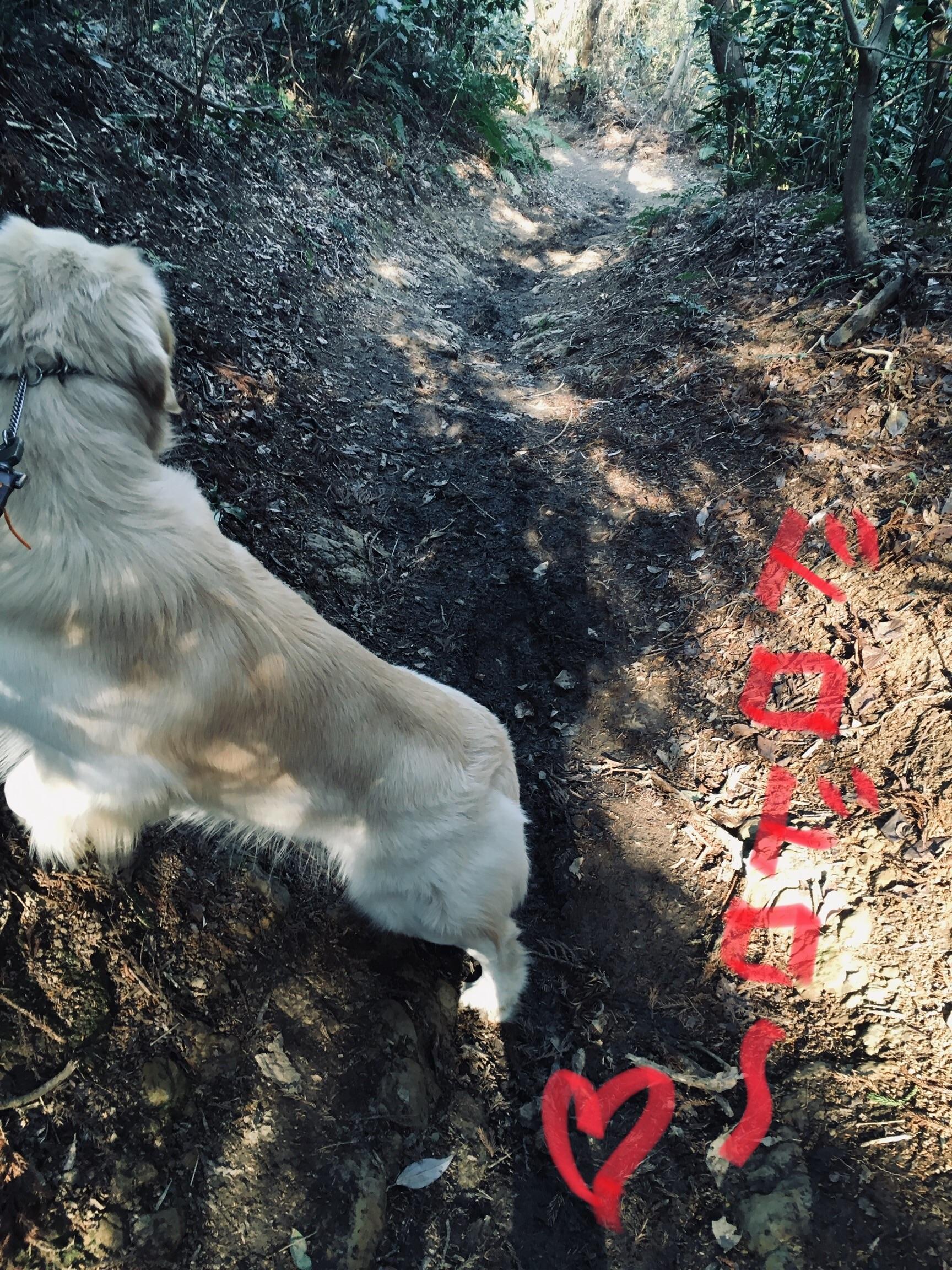 ドロドロ道の犬