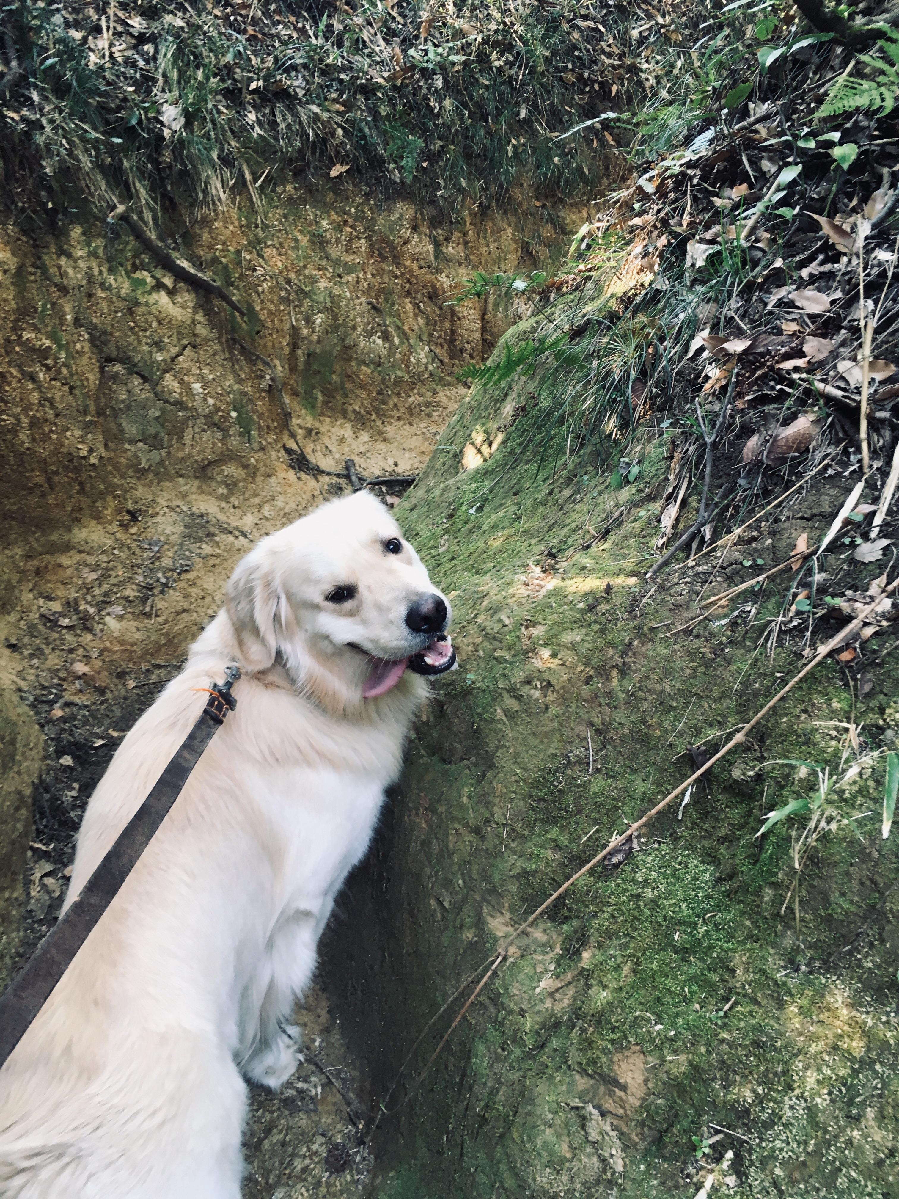 狭い山道を歩く犬