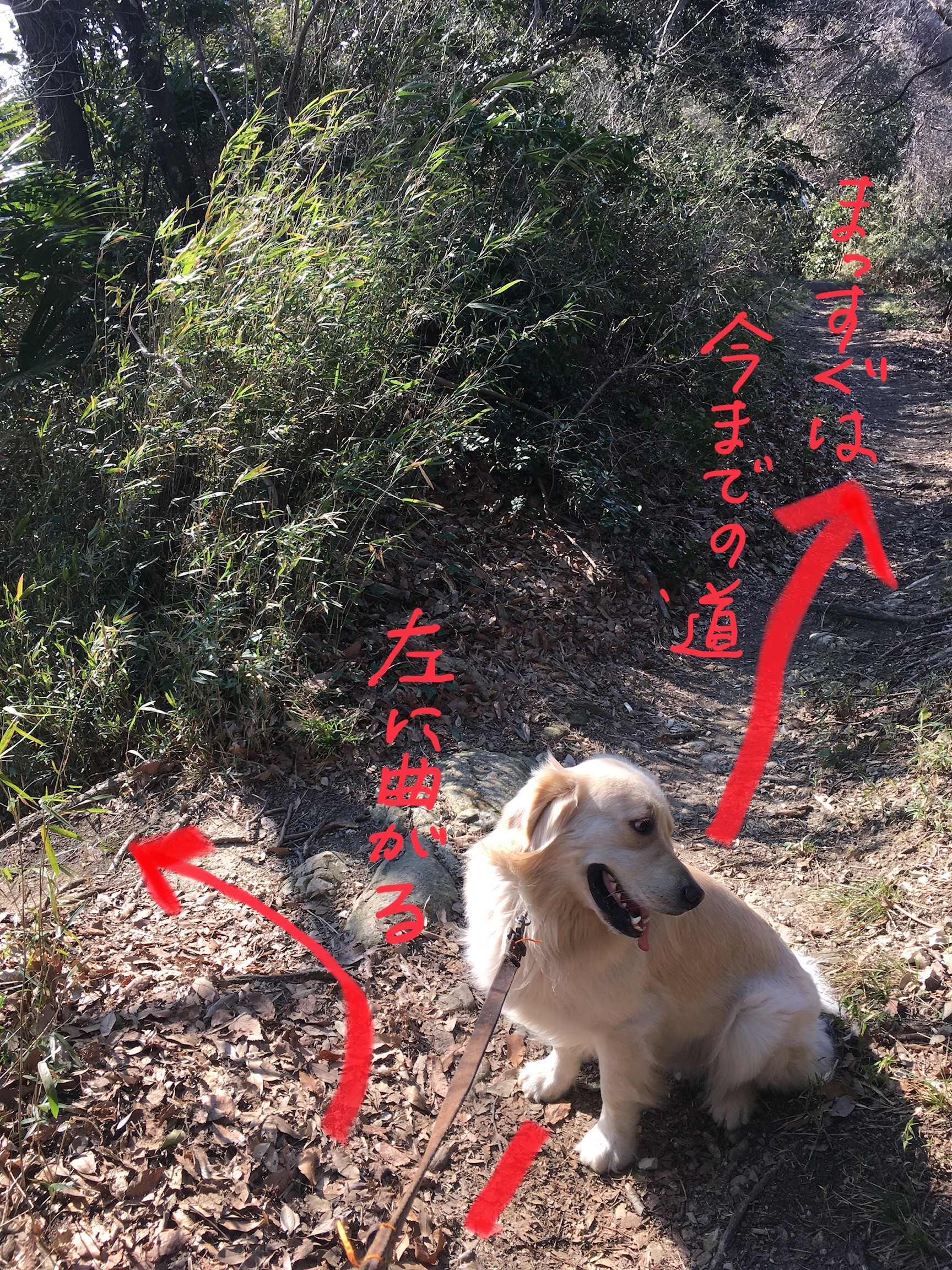 細くてわかりにくい枝道と犬