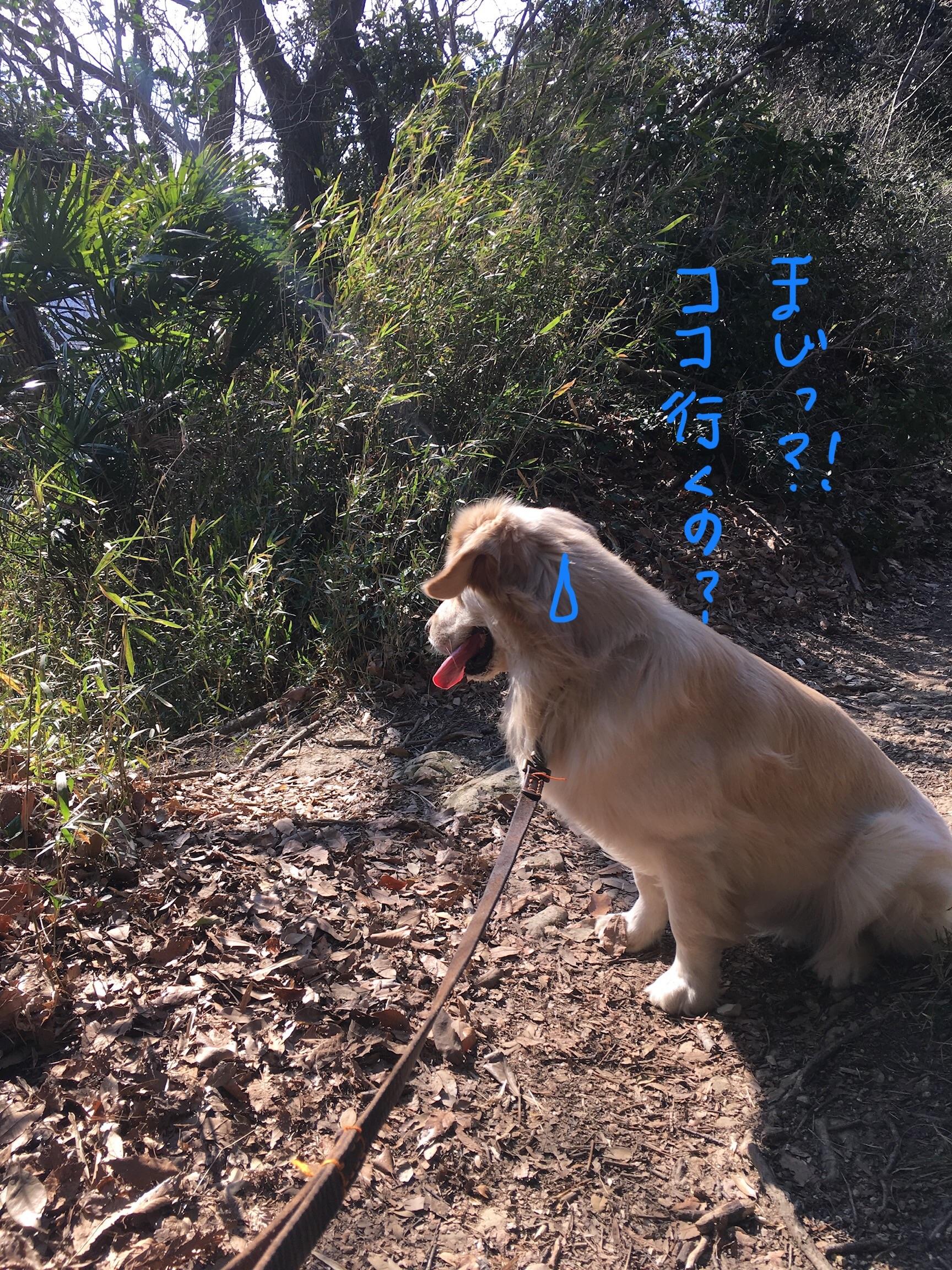 急斜面にびびる犬