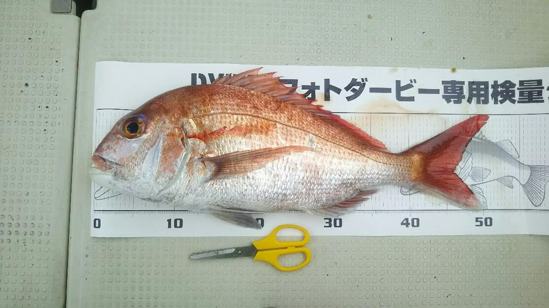 f:id:flyfisher417:20190516125115j:plain
