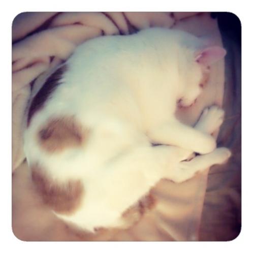 【寝床のネコ】