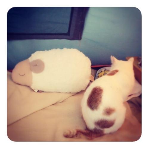 【ほんやら堂 安眠おやすみ羊 抱き枕】